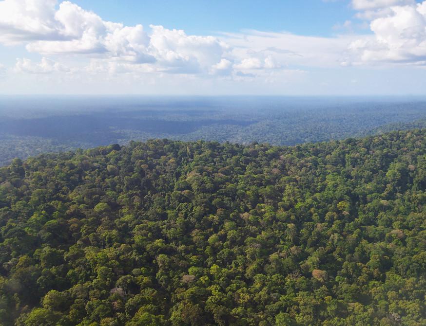 A perte de vue, la forêt guyanaise ...